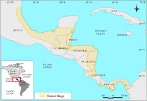 Mahogany_Range_Central_America